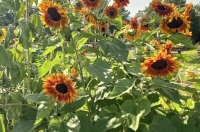 Community Garden is a huge success!